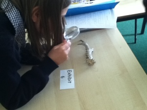 Examining and antler closely
