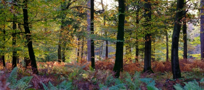 US students choose the New Forest for their studies!