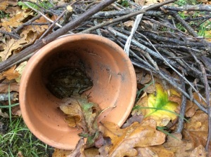 Making a hibernaculum to help keep a frog snug during the winter