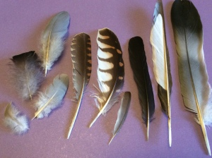 Collect moulted feather for identification or simply for their varied beauty