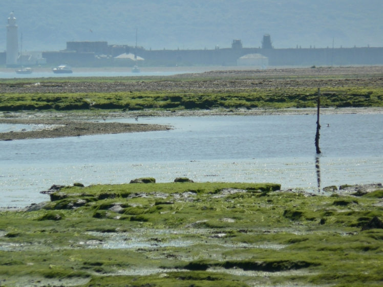 keyhaven-at-low-tide-looking-towards-hurst-castle1553