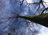sky-gazing-anderwood-new-forest