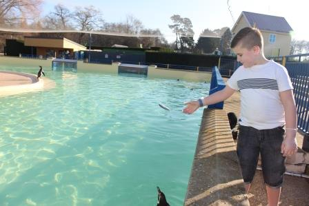 penguin-feeding-at-paultons-park